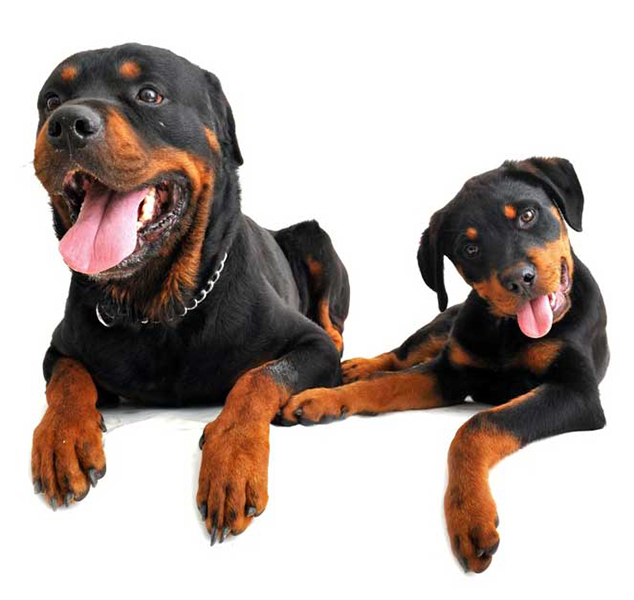 Training City Dogs