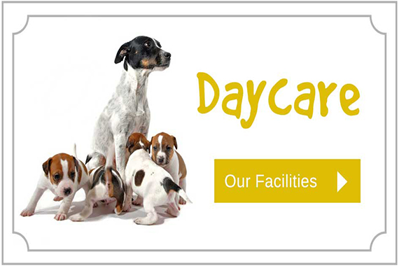 Daycare at City Dogs