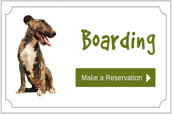 Boarding at City Dogs